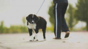 Dog on leash outdoors