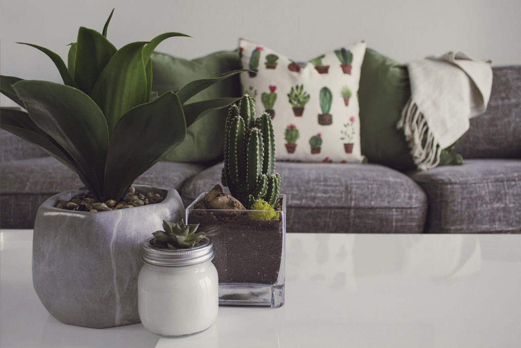 Contemporary design - cactus and plants in the livingroom